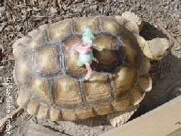 minty-turtletour.jpg